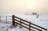 snow pasture in dense fog