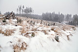 snowfall in Harz mountains