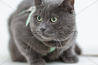 gray cat siting on the surface