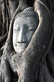 Head of a historical Sandstone Buddha
