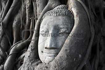 Head of a historical Sandstone Buddha