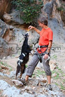 Climber feeding a goat at a cliff