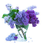 Bunch of Lilac in glass vase