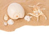 seashells on sand border