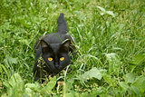 Black cat in ambush outdoors
