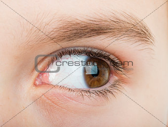 Human eye looking to the right