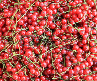 background of red berries in closeup