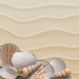 Marine background with seashells on sand.