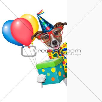 birthday dog