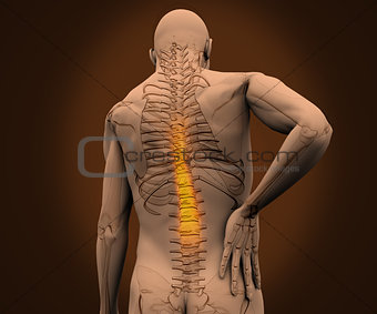 Digital skeleton having highlighted pain on his back