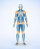 Joints of a blue digital skeleton