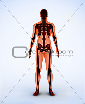 Orange digital skeleton