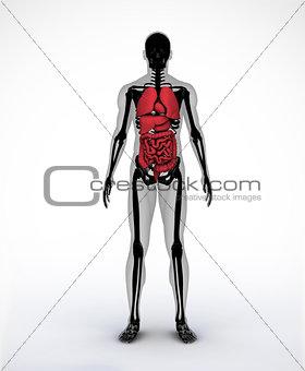 Black and grey digital skeleton with visible organs