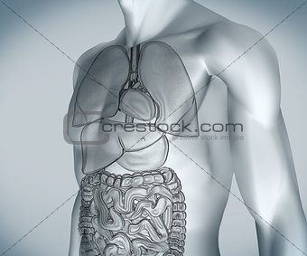 Grey digital body with organs