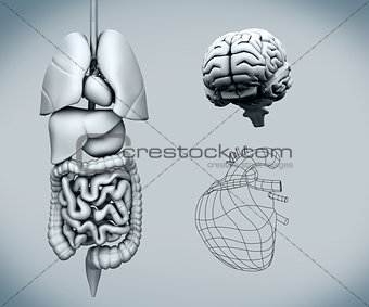Assembled human organs with the brain