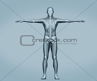 Grey digital skeleton body standing