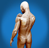 Transparent digital body with shoulder pain