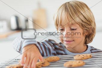 Boy taking a cookie