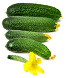 Freshness cucumbers isolated on white background