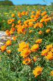 Bunch of orange wild flowers