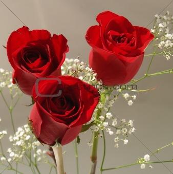 three red roses