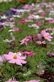 Variety of spring flowers