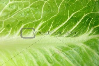 Close up of romaine lettuce