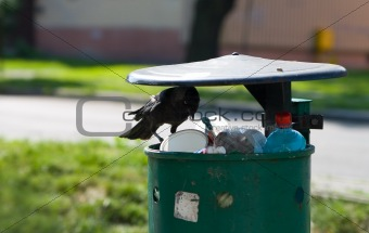 crow is haunting on dustpan