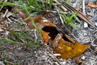 broken bottle in earth