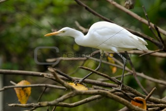 white heron on a tree