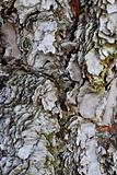 Tree Bark Texture Background