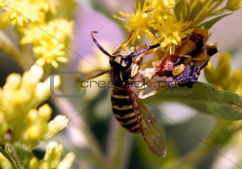 Ambushed Wasp