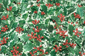 Artificial ilex background