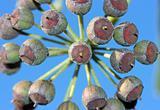 Floral cluster close-up