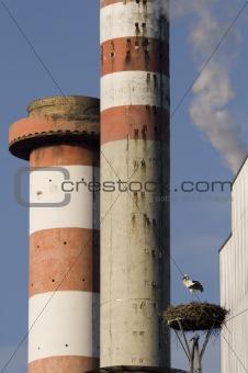 Stacks and stork