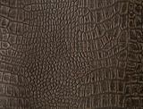 Alligator texture