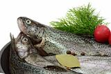 Trout Breeding