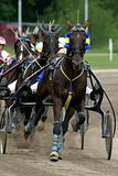 Standardbred horse