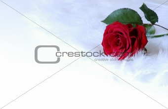 background with rose