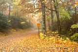Deserted Pathway through Fall foliage