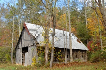 Abandoned Barn Surrounded by Treees