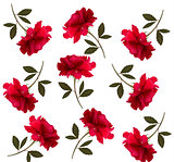 Holiday pattern with red beautiful roses. Vector
