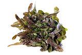 cocarde salad