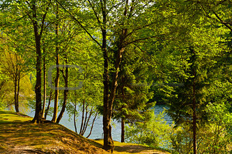 Wooded Shore