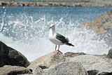 seagull on rock at harbor