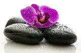Violet orchid on black spa stones with water drops