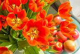 tulips in sunlight