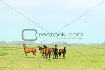 Six horses in a green meadow
