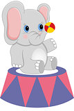 Baby circus elephant with ball