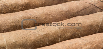 Cigars close up